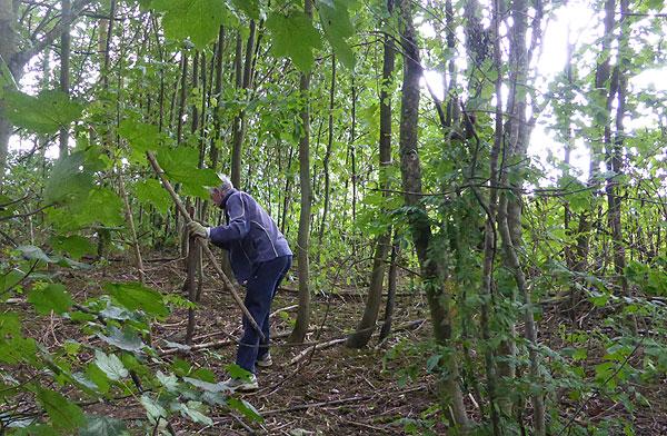 foraging firewood