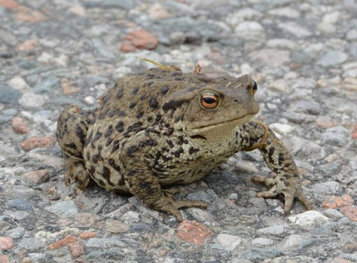 Toad UK