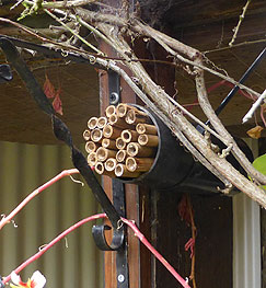 Bug Hotel Pipe and Bamboo