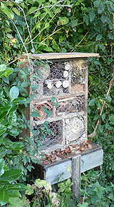 Bug House in hedgerow