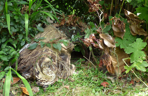 Hogitat Hedgehog House amongst bushes