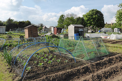 Typical Allotment scene