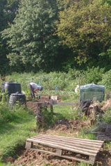 lady in allotment