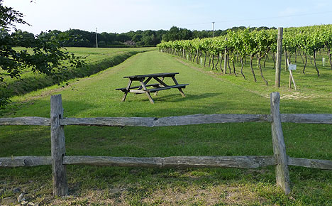 view accross vineyards in Kent
