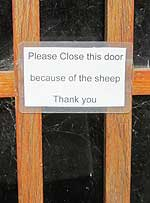 beware sheep Romney Marshes