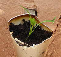 egg shell as seedling starter