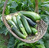 Picking Courgettes