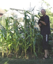 Sweet Corn in August