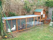 example of good chicken run