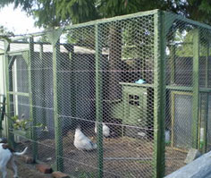 safe chicken run