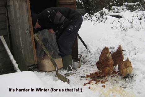 Hen Coop in winter snow