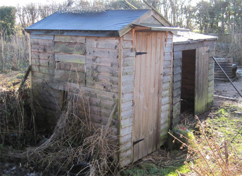 Shed Converted To Coop