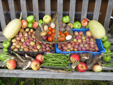 Garden Fruit and Vegetable Harvest