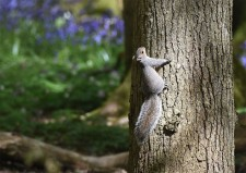 Squireel in Spring!