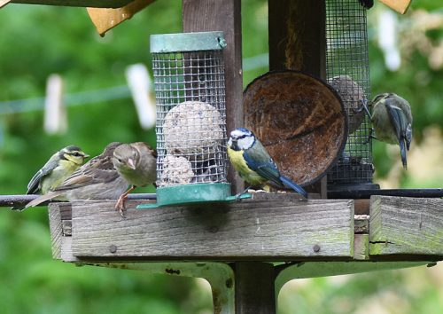 Bird Table in June