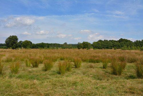 Hothfield Heathland
