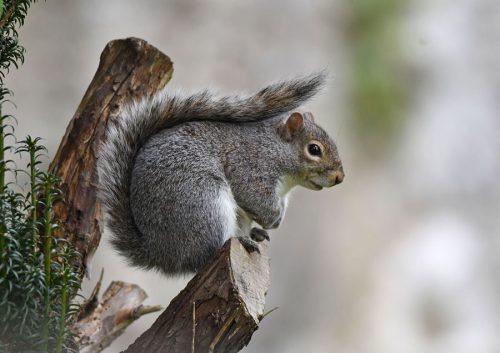 Squirrel-on-branch