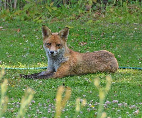 Flox resting in Garden
