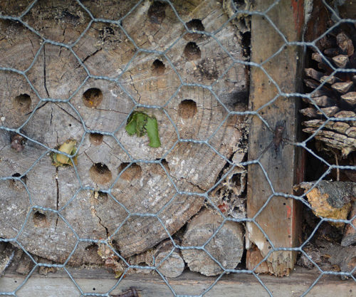 Leafcutter Bee House hole