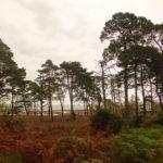 Heath and Woodland Arne