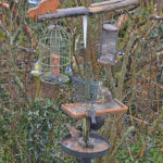 birds feeding in winter