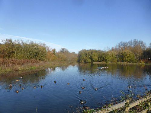 Bishops Waltham North Pond