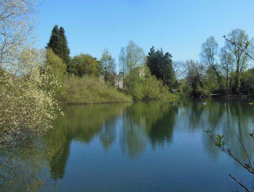 Bishops Waltham South Pond