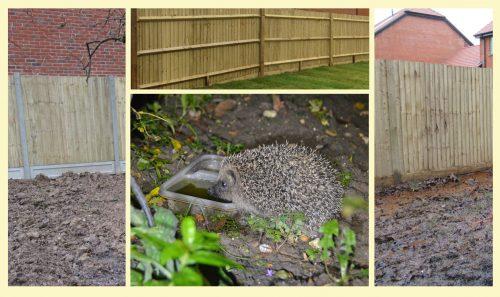 Hedgehogs v New Builds