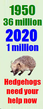 Hedgehog Population decline
